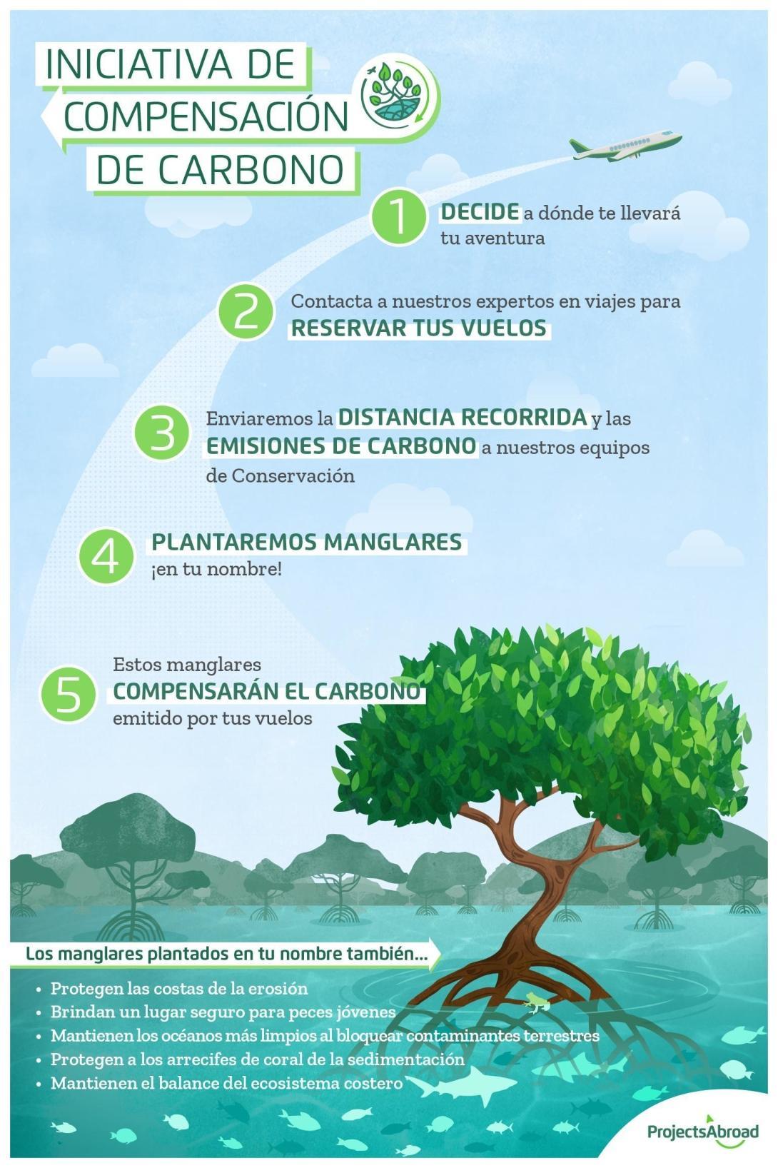 Infografía explicativa de cómo plantar manglares reduce nuestra huella de carbono.